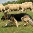 There are three types of people in this world: the sheep who go about their business, the wolf who feeds on the sheep, and the sheepdog who protects the flock. Last […]