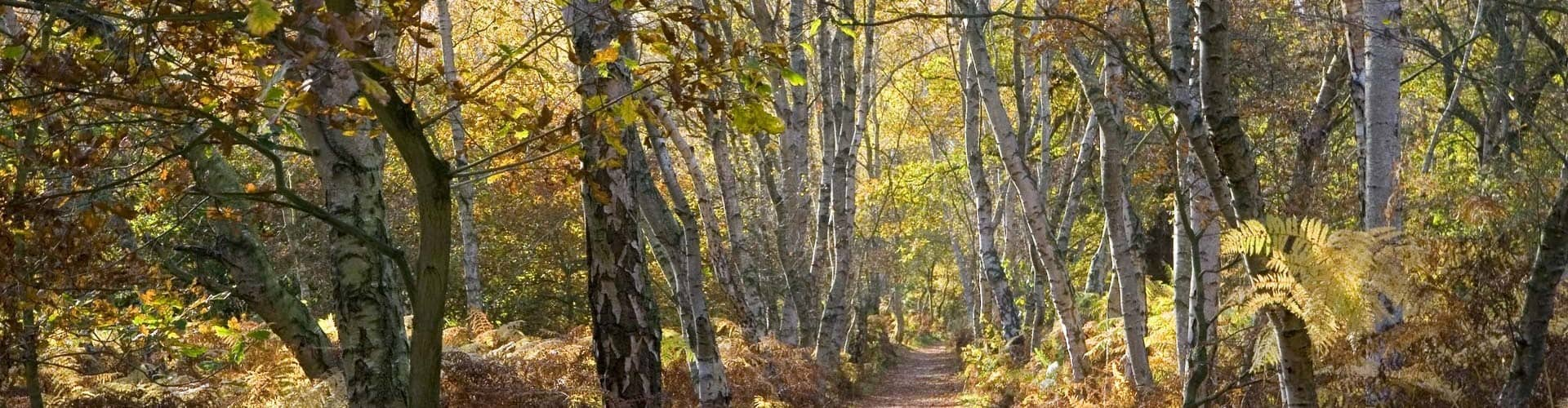 Email0Facebook0Twitter0Reddit0X Linkedin0 Stumbleupon0 The gate to heaven is a tunnel of birch trees. There is no photo of God's Gate but this silver birch forest offers a glimpse My family has […]