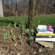 Tulips have sprouted at the base of the plum trees. On my run this morning, bare branches shook and trees creaked from the north wind, but the sun was defiant and the […]