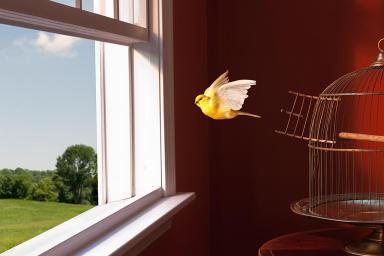 bird-escape-97373083-resized