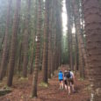 I've come across the topic of walking in my reading, especially lately, as well as over the years.  Writers walk and maybe the converse, while not logically true, is […]